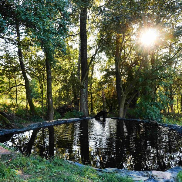 Rychlov rybníček